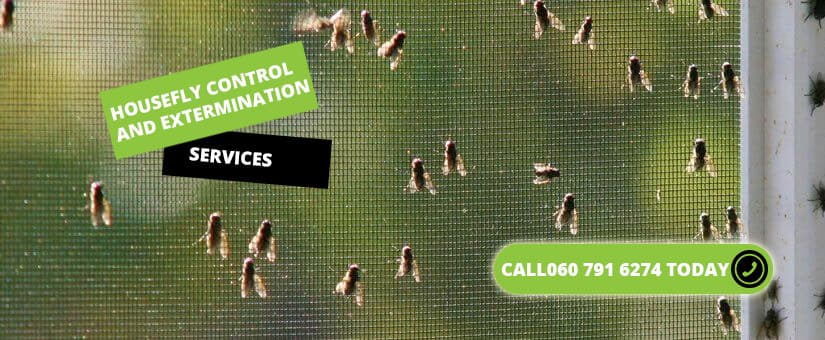Flying insect control services cape town